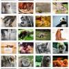 Nuestros queridos animalitos