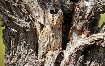 20 Animal Camouflage Examples #photography #animales