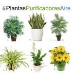 Seis plantas de interior que limpian el ambiente #infografía #mobiliario #plantas
