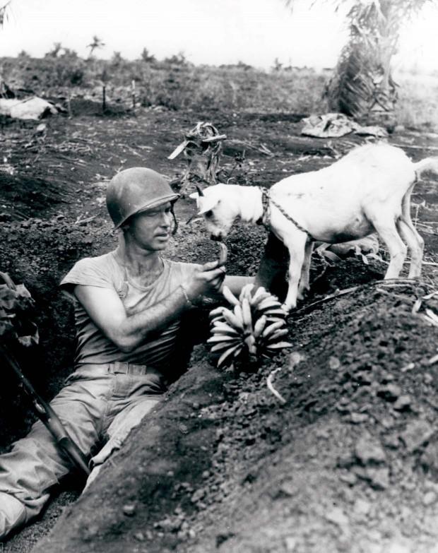 Soldado da de comer a una cabra durante la Segunda Guerra Mundial en 1944