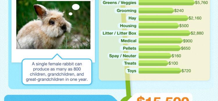 Coste de mantener a tu mascota #infografia #infographic#pets #economia
