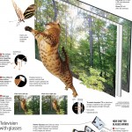 Cómo funciona la televisión 3D #infografia #infographic #3d #tecnologia