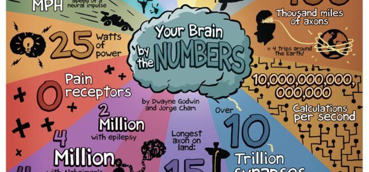 Tu cerebro en números #infografia #infographic #health