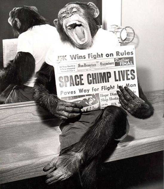 El primer mono en el espacio posa con un periódico con su titular en 1961