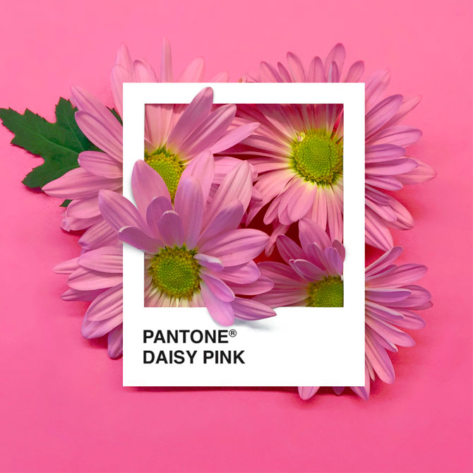 Pantone Flowers, una paleta de colores hecha con flores